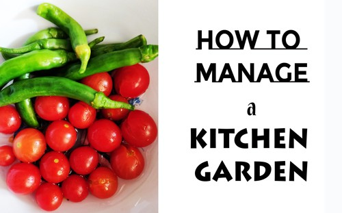 tips for a kitchen garden