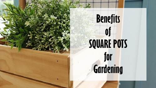 Square Pots for Gardening